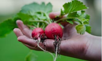 Quem não deseja se alimentar com orgânicos?