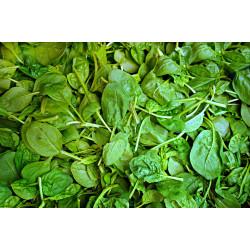 Espinafre orgânico - maço
