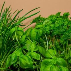 Cheiro verde orgânico maço
