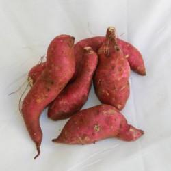 Batata doce orgânica