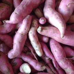 Batata doce orgânica - 500g