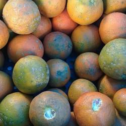 Limão cravo orgânico - 500g